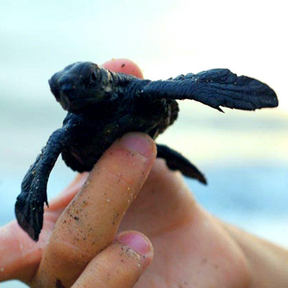 Adventure Ocean Play Wildlife animal close up reptile hand close