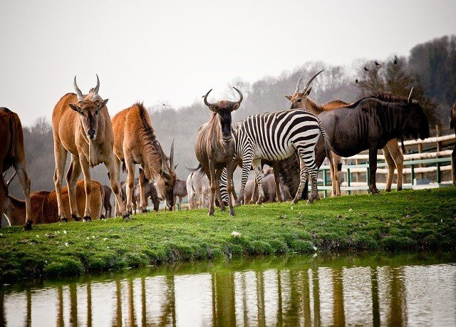 sky grass water animal mammal herd Wildlife fauna standing savanna group Safari zebra Adventure horse like mammal grazing