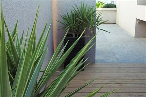 plant grass grass family arecales flooring lawn agave