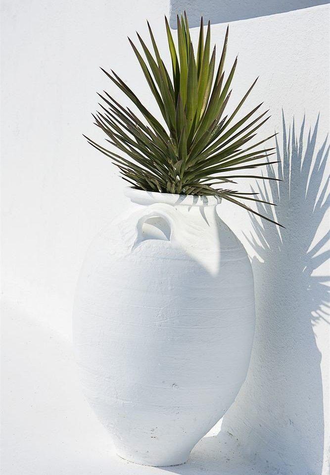 white plant vase leaf land plant branch flower agave sand