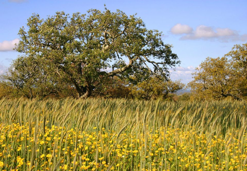 grass tree sky field habitat plant grassland prairie pasture ecosystem flower flora meadow tall grass family land plant woody plant rural area food flowering plant landscape rapeseed wildflower savanna agriculture brassica autumn