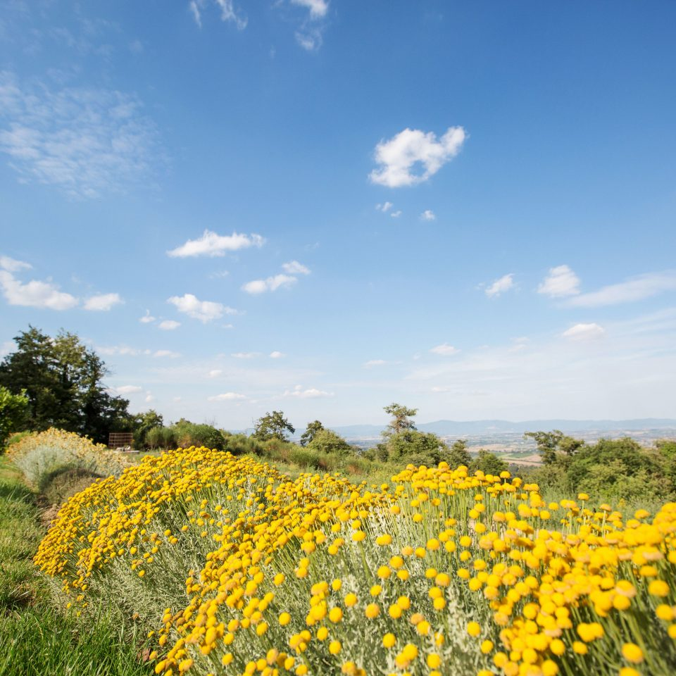 grass sky flower plant field yellow ecosystem rapeseed grassland prairie land plant meadow brassica agriculture flowering plant plain daisy family rural area sunflower mustard plant wildflower sunlight grass family vegetable grassy