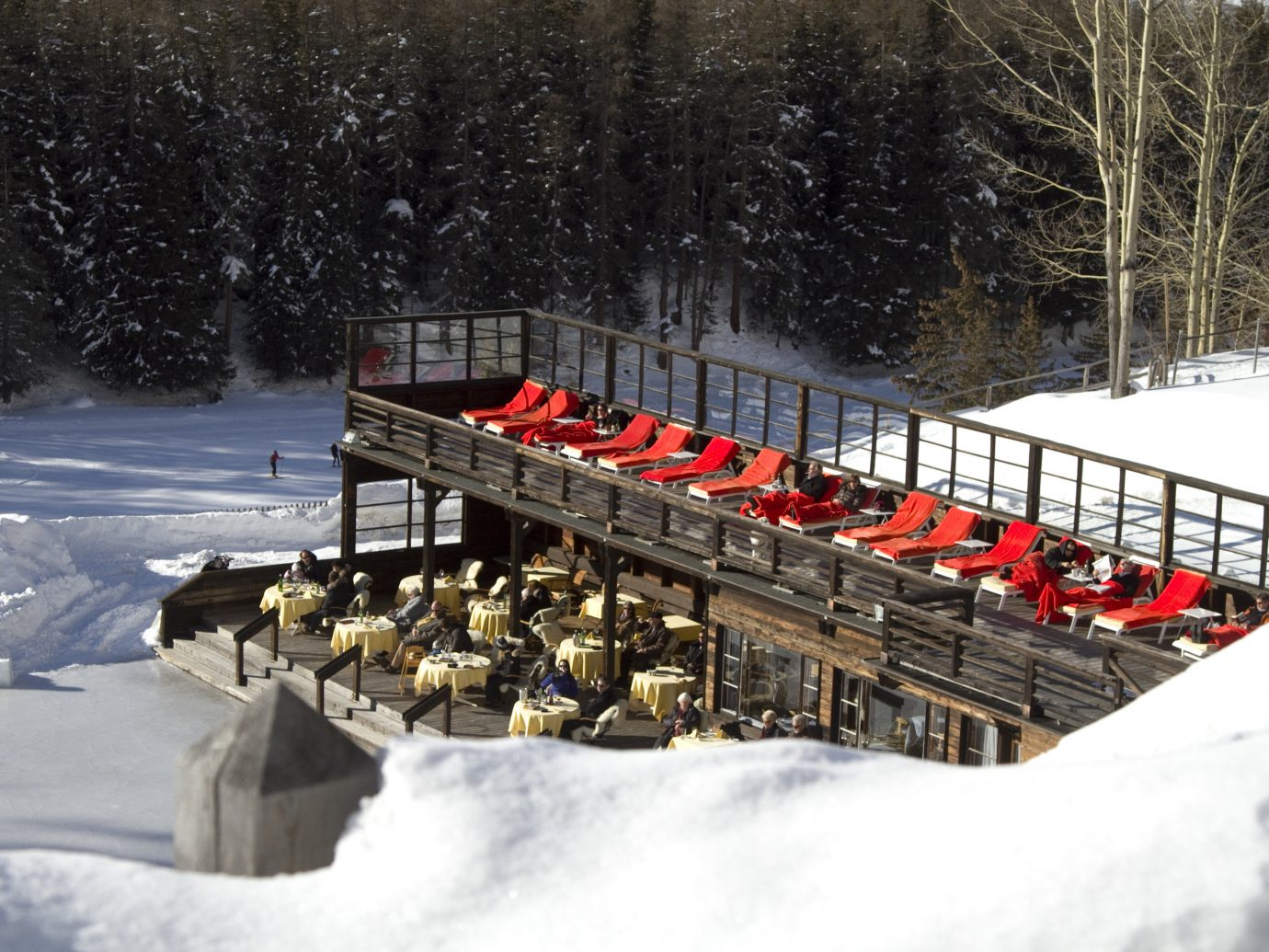 Food + Drink snow tree outdoor Winter weather geological phenomenon covered season Nature winter sport rail piste line