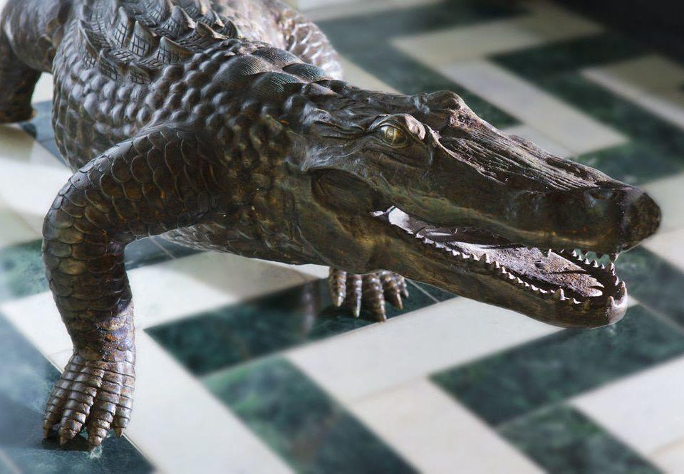 reptile animal crocodilian reptile alligator crocodilia crocodile fauna tyrannosaurus velociraptor dinosaur