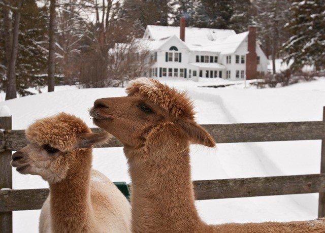 mammal tree animal vertebrate alpaca camel like mammal fauna llama