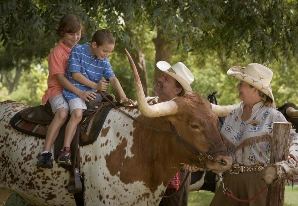 tree animal mammal bovine cattle like mammal pack animal animal sports ox