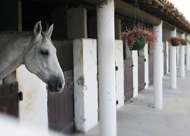 building horse animal mammal standing horse like mammal stable farm building donkey