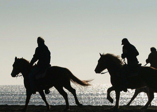sky horse mustang horse equestrianism running stallion silhouette herd horse like mammal animal sports mare equestrian sport sports pack animal sandy