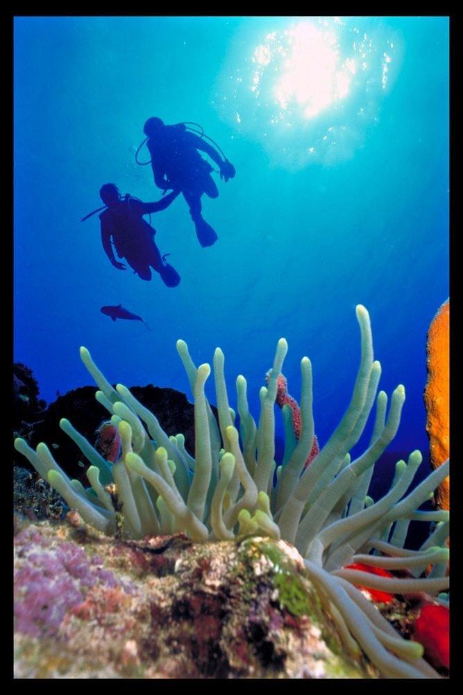 habitat coral reef reef marine biology coral reef fish biology underwater organism coral aquarium coelenterate