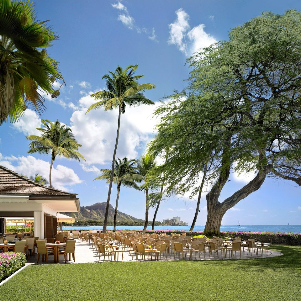 Architecture Beachfront Boutique Hotels Buildings Exterior Hawaii Honolulu Luxury Resort Scenic Views Trip Ideas Tree