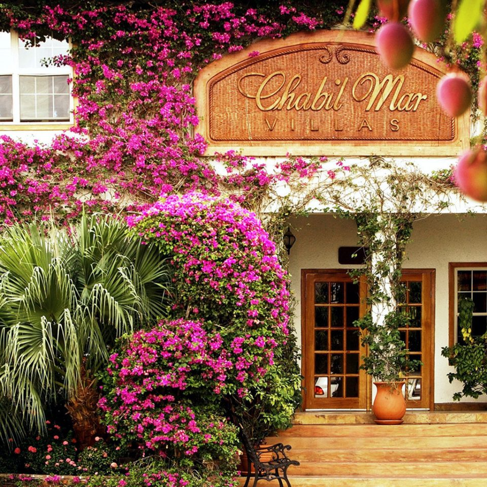 Architecture Buildings Exterior Grounds tree plant flower floristry Garden home Courtyard Resort bushes