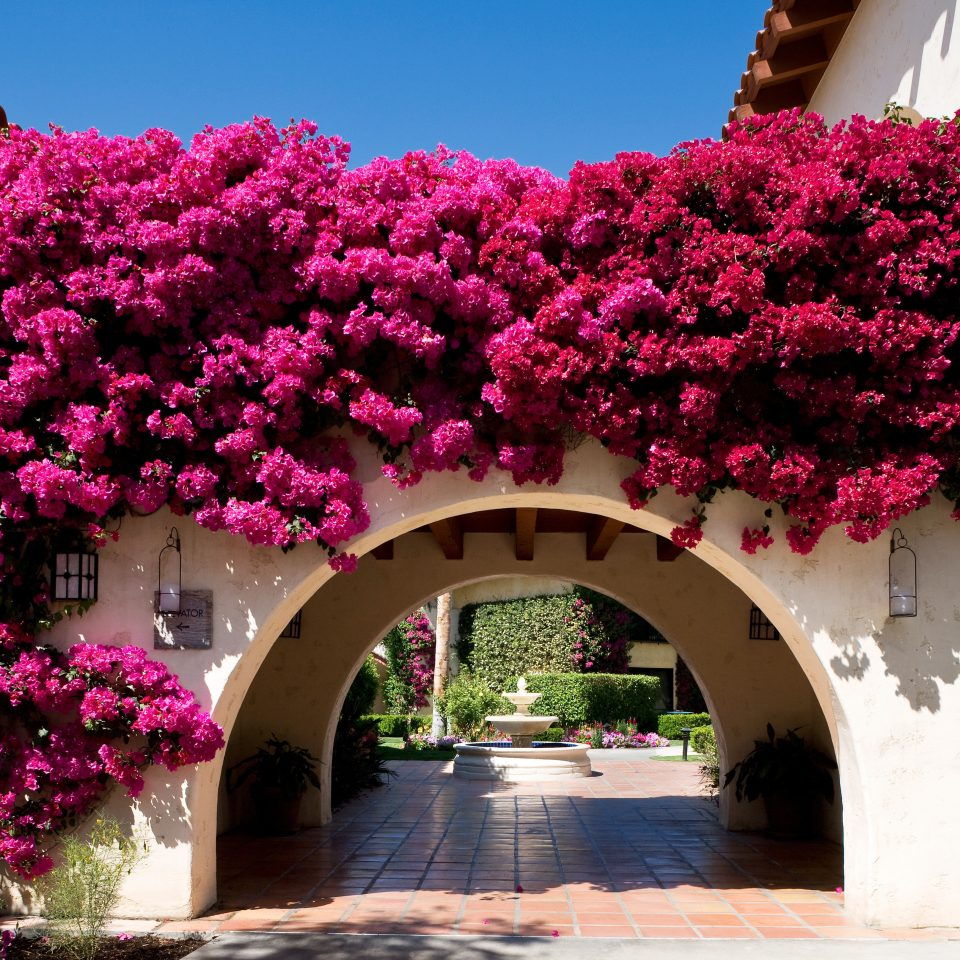 Architecture Cultural Exterior Grounds Resort tree flower plant flora botany pink blossom Garden spring arch shrub stone