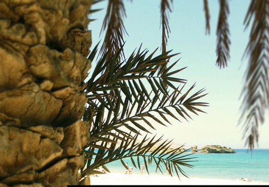 plant tree branch palm palm family land plant woody plant arecales grass family leaf spruce fir date palm conifer