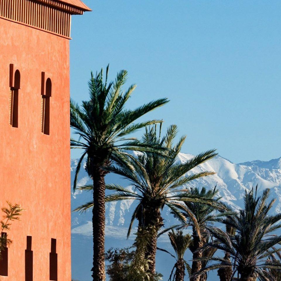 tree sky building palm landmark tower arecales plant tall