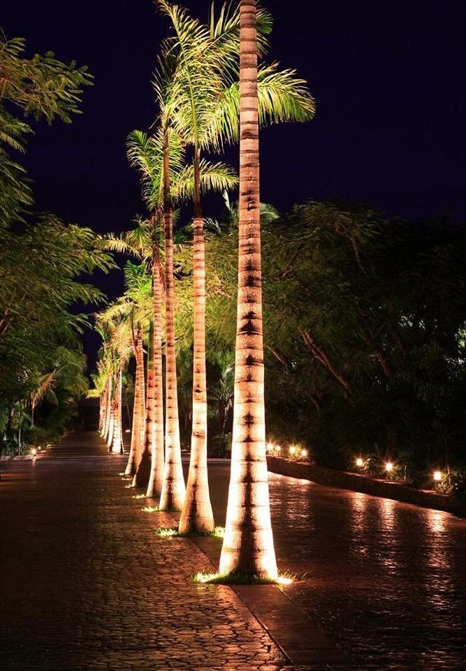 tree water night plant light flower arecales woody plant lighting palm family water feature evening street light palm lined surrounded
