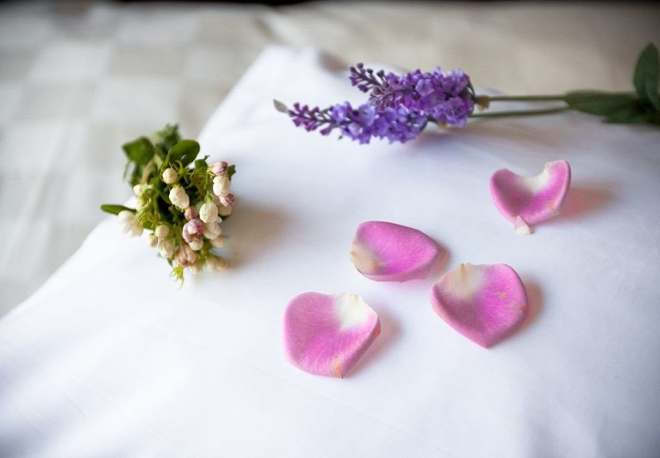 flower pink plate purple plant petal flower bouquet floristry cloth organ white macro photography blossom arranged