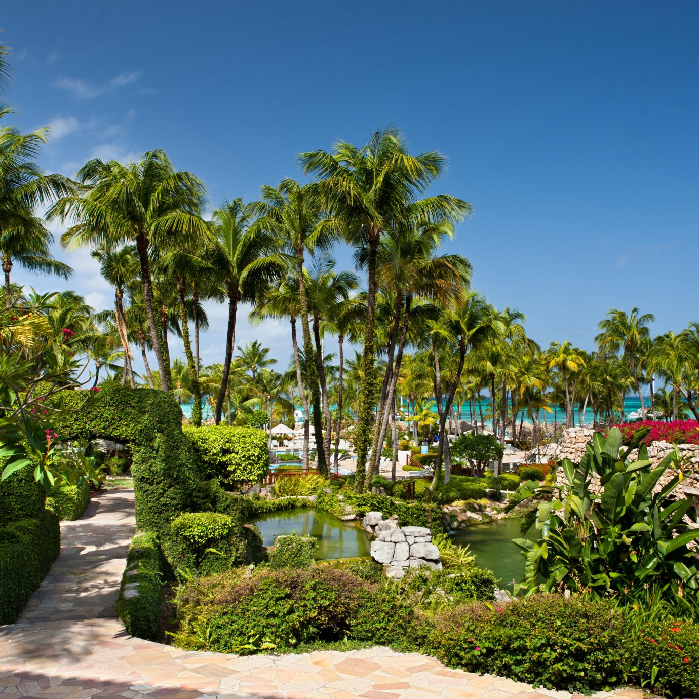 Aruba Beachfront caribbean Casino Classic Grounds Hotels Resort Tropical tree sky flora ecosystem botany plant Garden arecales flower tropics palm palm family botanical garden park Jungle lined