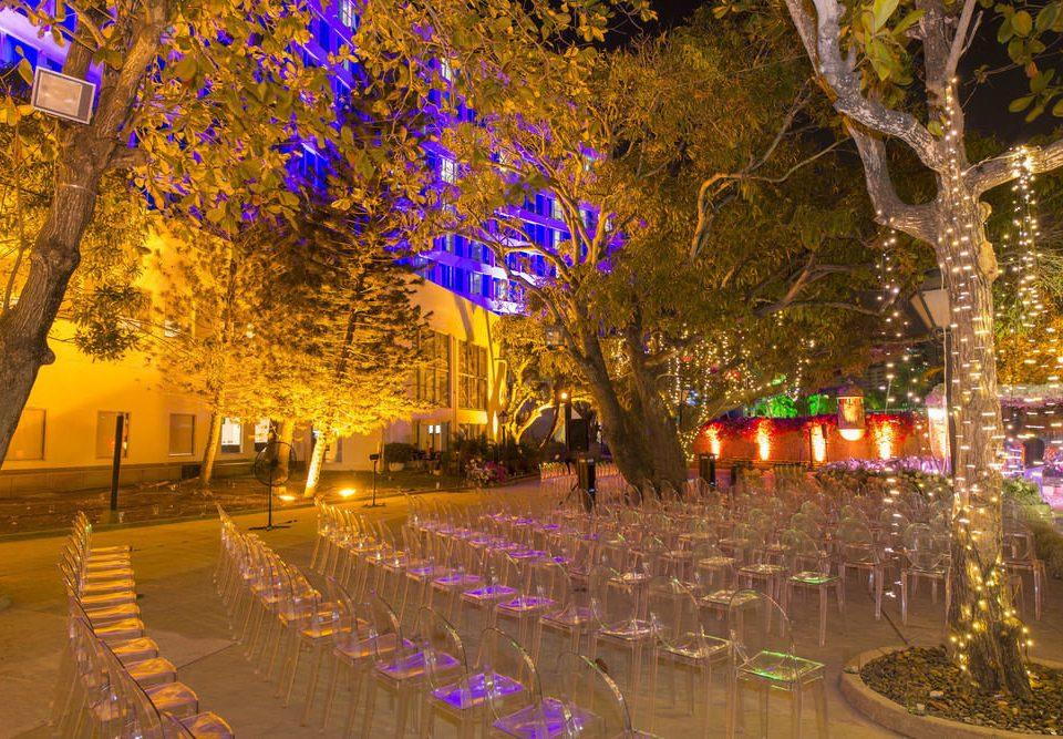 tree night flower plant light season woody plant leaf evening autumn christmas lights