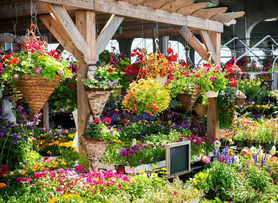 Trip Ideas flower outdoor floristry flora Garden botany plant flower arranging yard backyard outdoor structure floral design annual plant botanical garden colorful