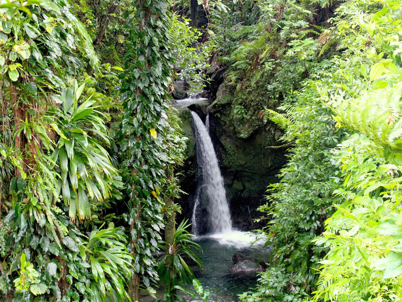 Trip Ideas tree outdoor habitat Nature vegetation rainforest natural environment green Waterfall ecosystem Forest botany old growth forest water woodland water feature Jungle stream leaf Garden branch flower autumn surrounded wooded lush