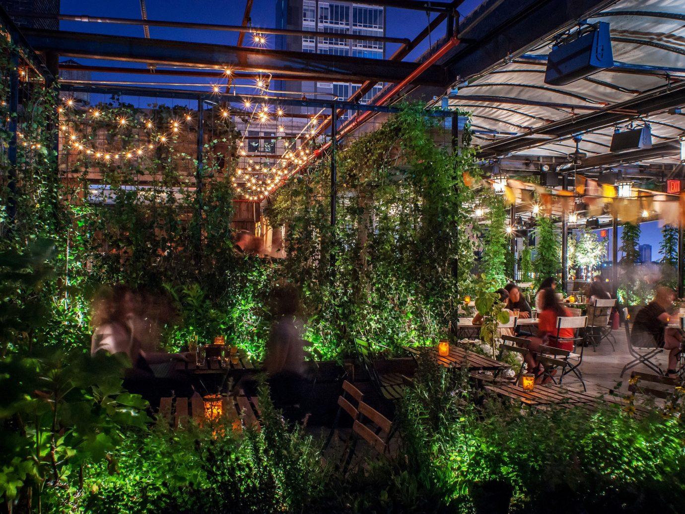 Food + Drink tree outdoor Jungle Resort outdoor structure flower