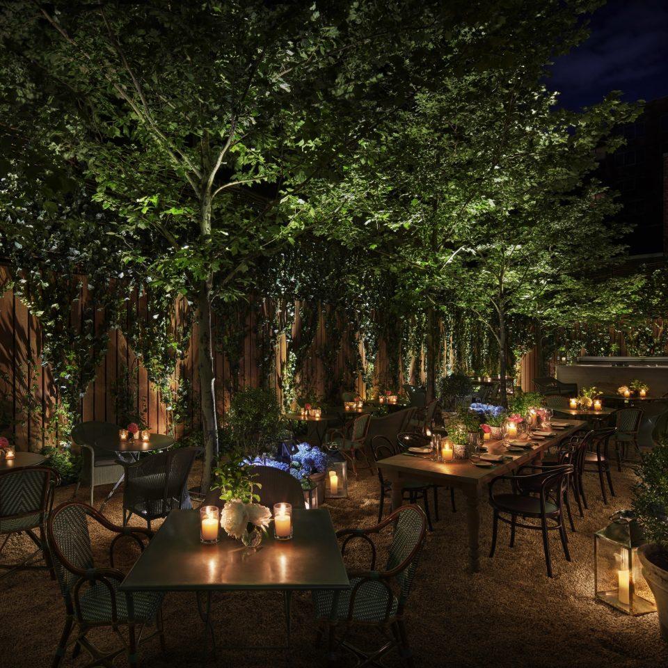 tree landscape lighting lighting backyard plant night evening landscape outdoor structure yard landscaping