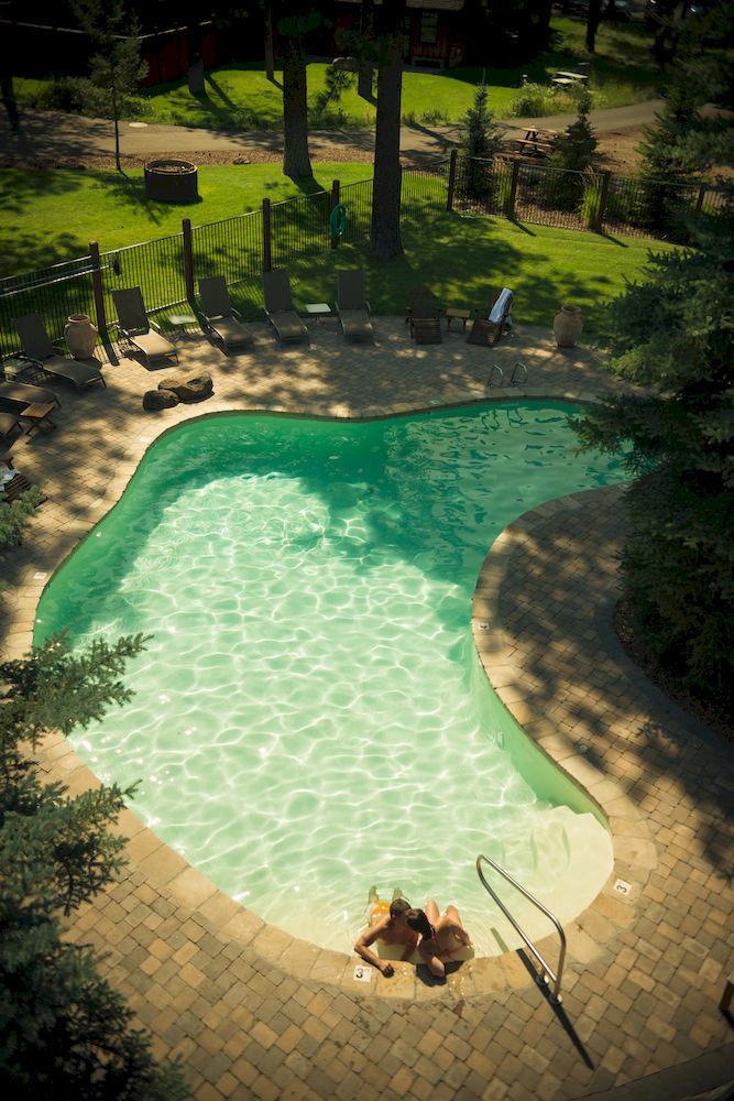 tree grass swimming pool green backyard