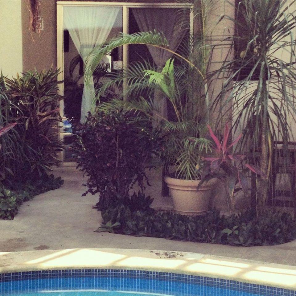 plant backyard