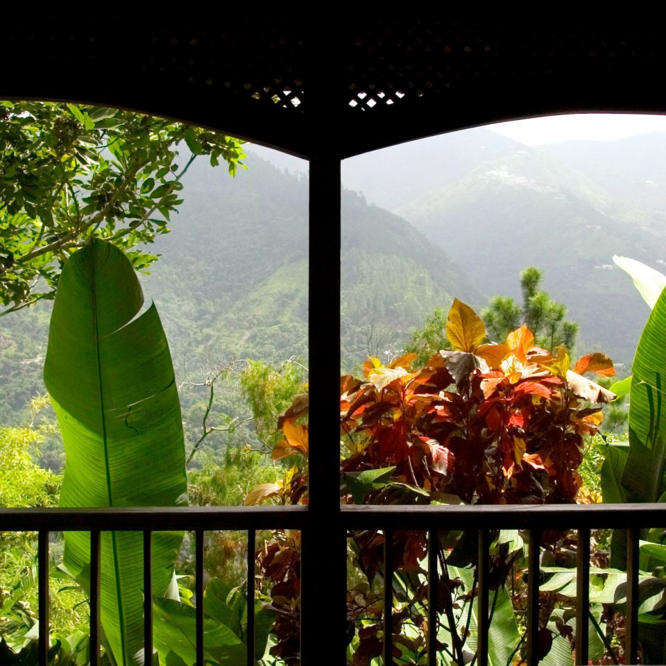 Balcony Country Romance Romantic Scenic views Tropical tree Nature green flora leaf botany plant flower Jungle Forest rainforest sunlight tropics arecales Garden agriculture