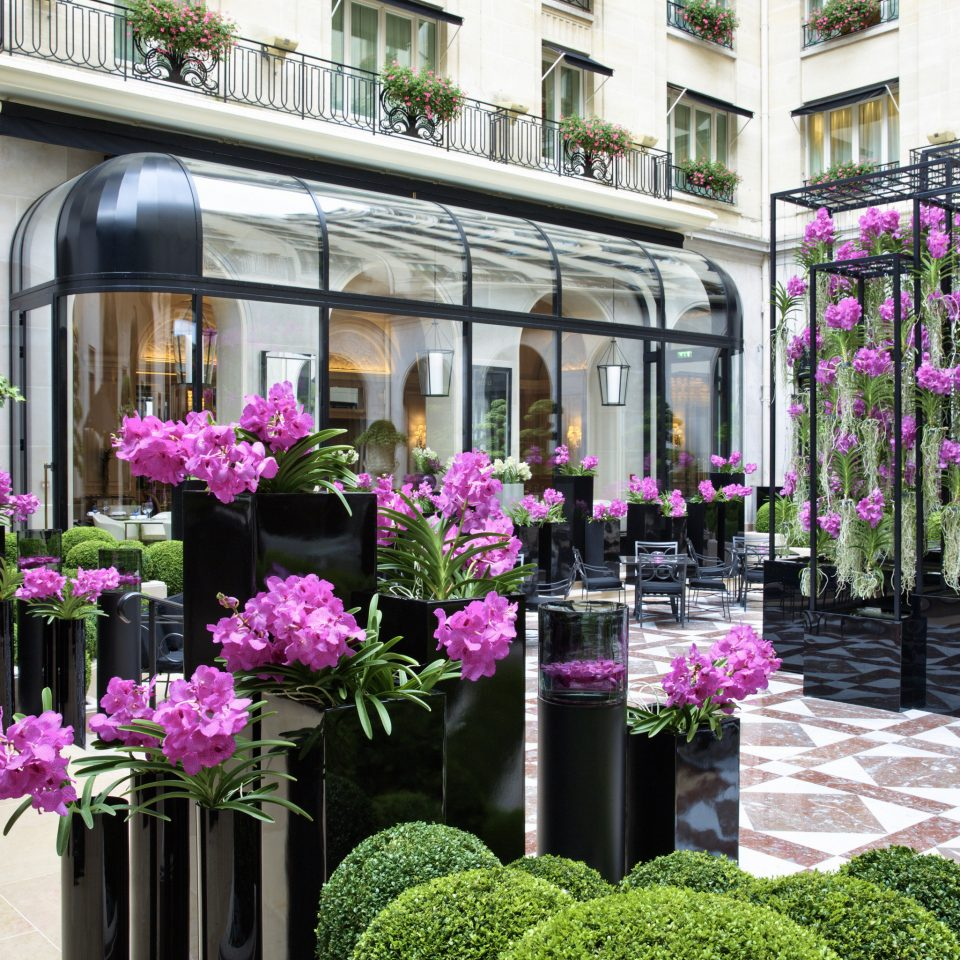 Hotels flower arranging pink floristry flower aisle purple flora plant Balcony floral design Courtyard Garden retail