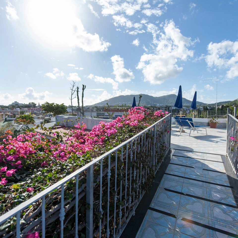 sky Fence flower building walkway plant Garden waterway park railing Balcony