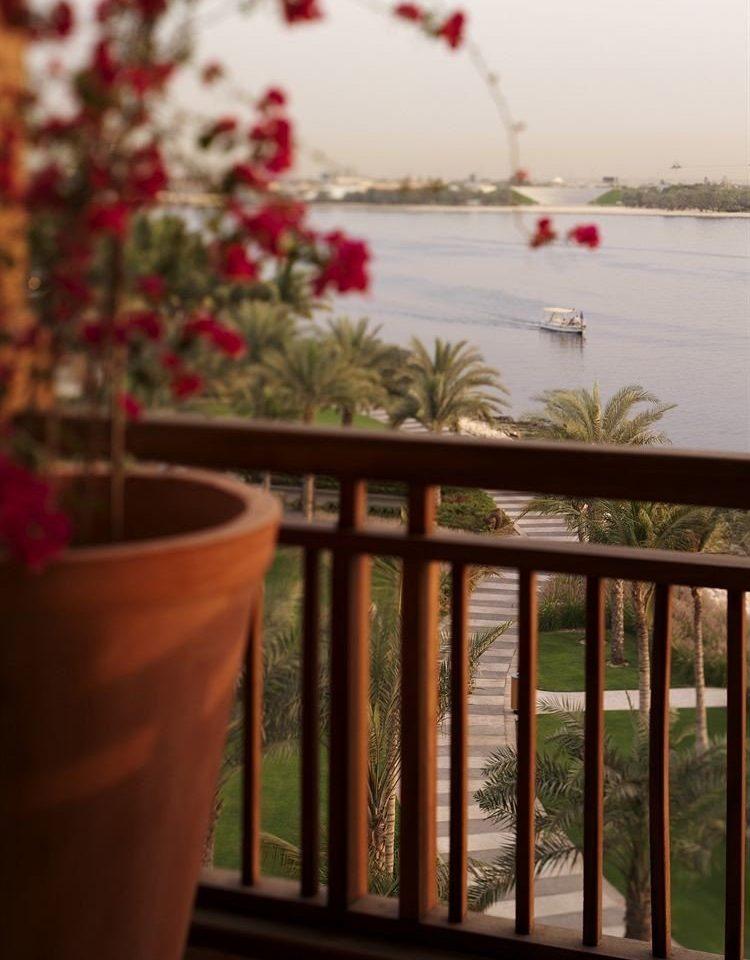 flower Balcony plant