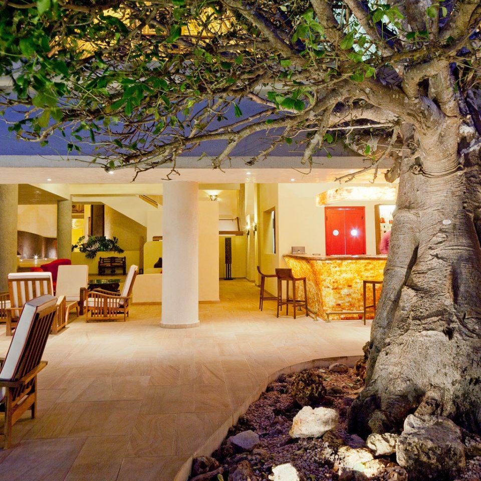 Bar Beachfront Dining Drink Eat Resort Romance tree home mansion flower