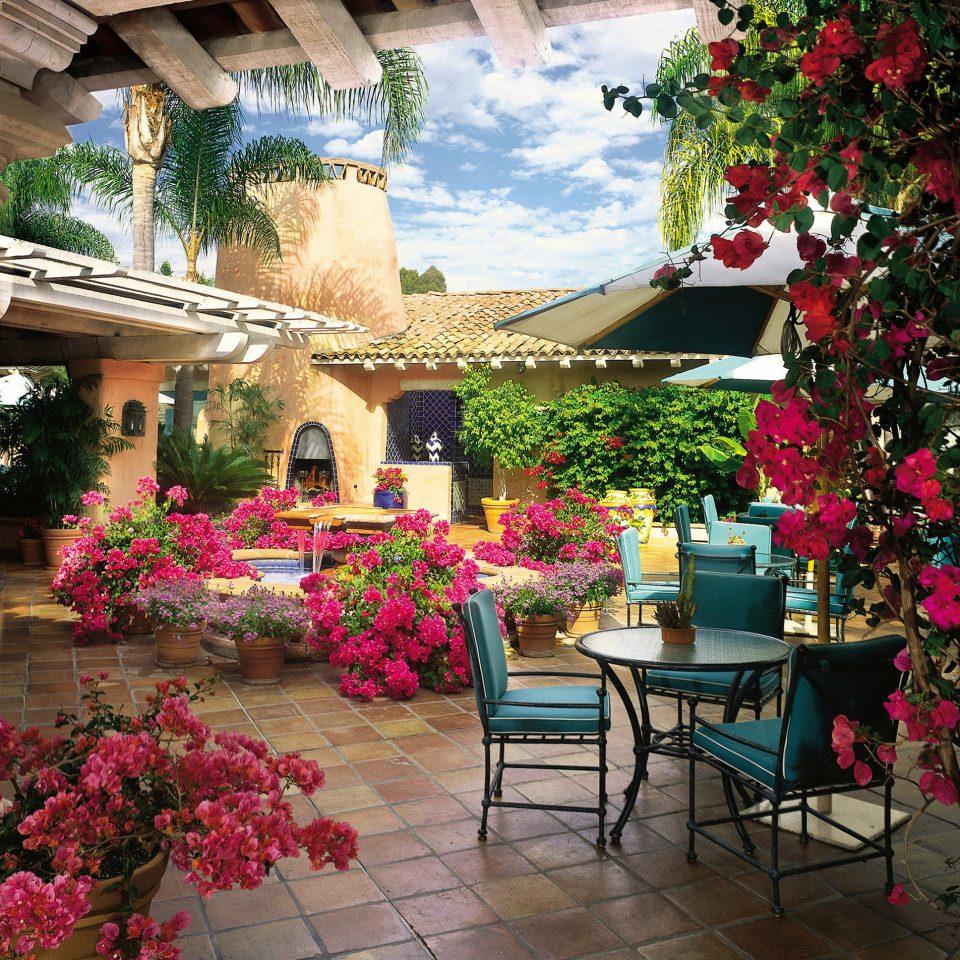 Bar Dining Drink Eat Elegant flower plant building floristry flower arranging Courtyard pink home floral design hacienda porch restaurant Garden arranged colonnade