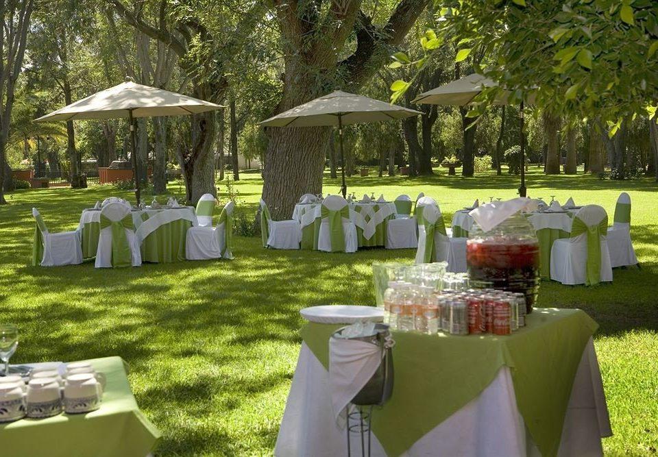 Bar Dining Drink Eat Hip Luxury grass tree Picnic banquet ceremony backyard wedding park flower Garden set arranged