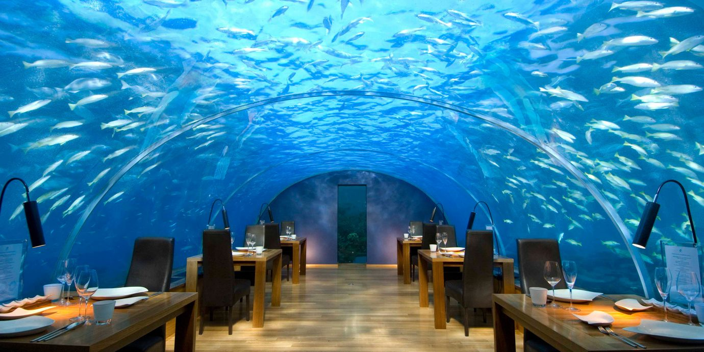 Bar Dining Drink Eat Elegant Entertainment Hotels Natural wonders Ocean Scenic views Wildlife chair screenshot theatre