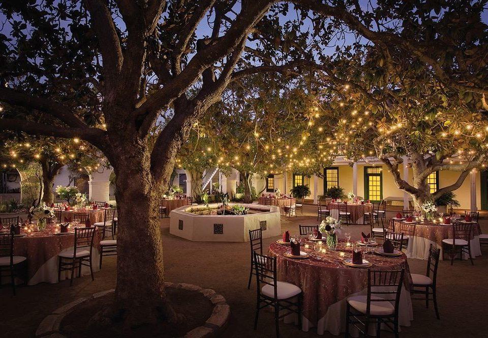 Bar Dining Drink Eat Elegant tree night evening wedding reception lighting function hall restaurant ballroom