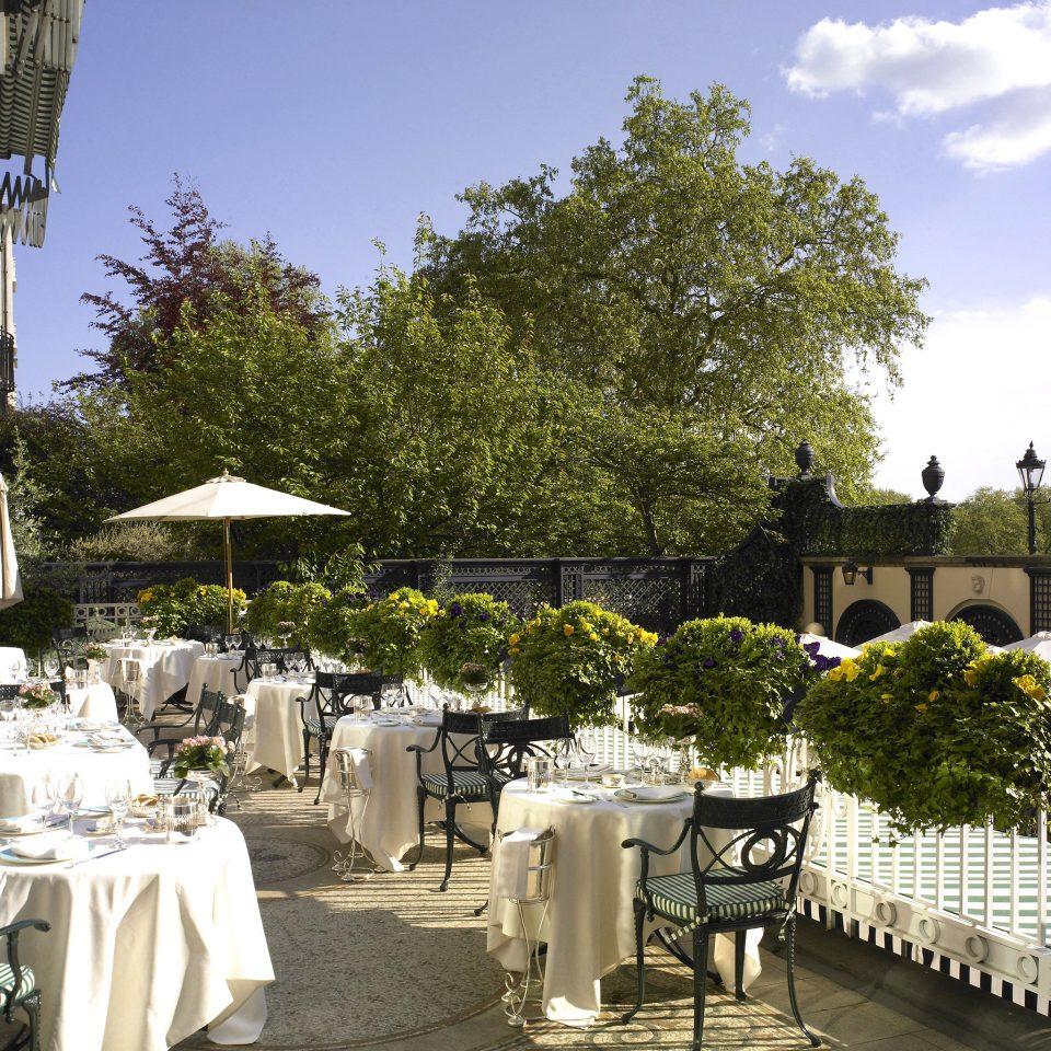 Bar Dining Drink Eat Elegant Luxury tree building flower Resort backyard