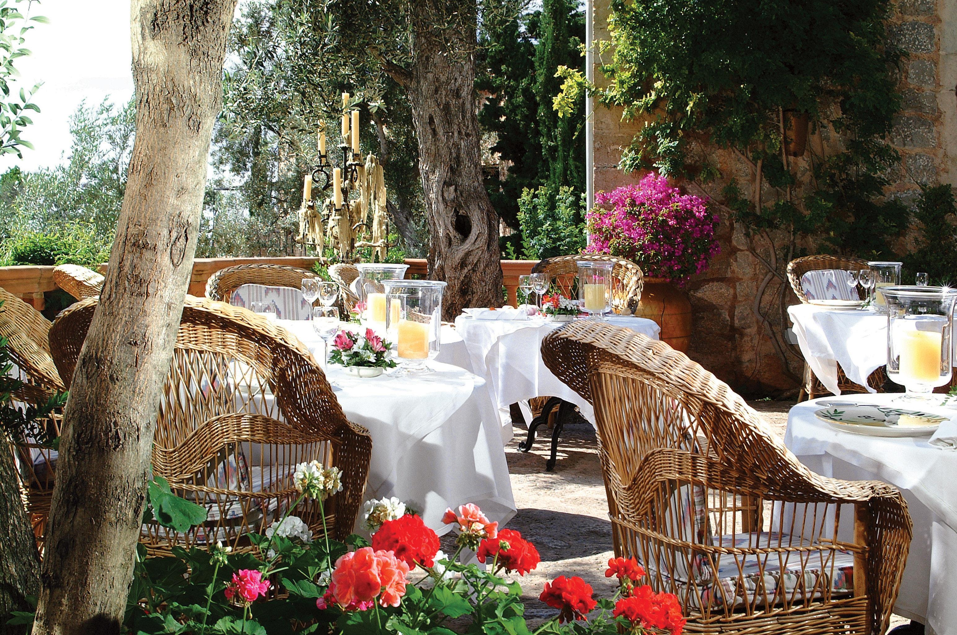 Bar Dining Drink Eat Lounge tree flower wedding ceremony backyard Garden restaurant Resort dining table