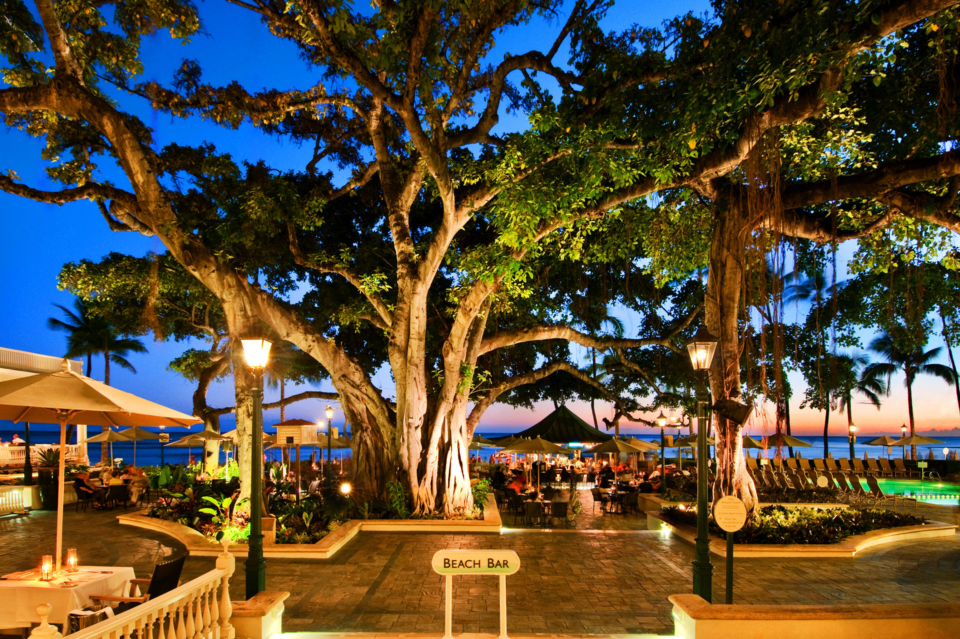 Bar Lounge Nightlife Outdoors Play Resort Scenic views tree arecales woody plant evening plaza plant