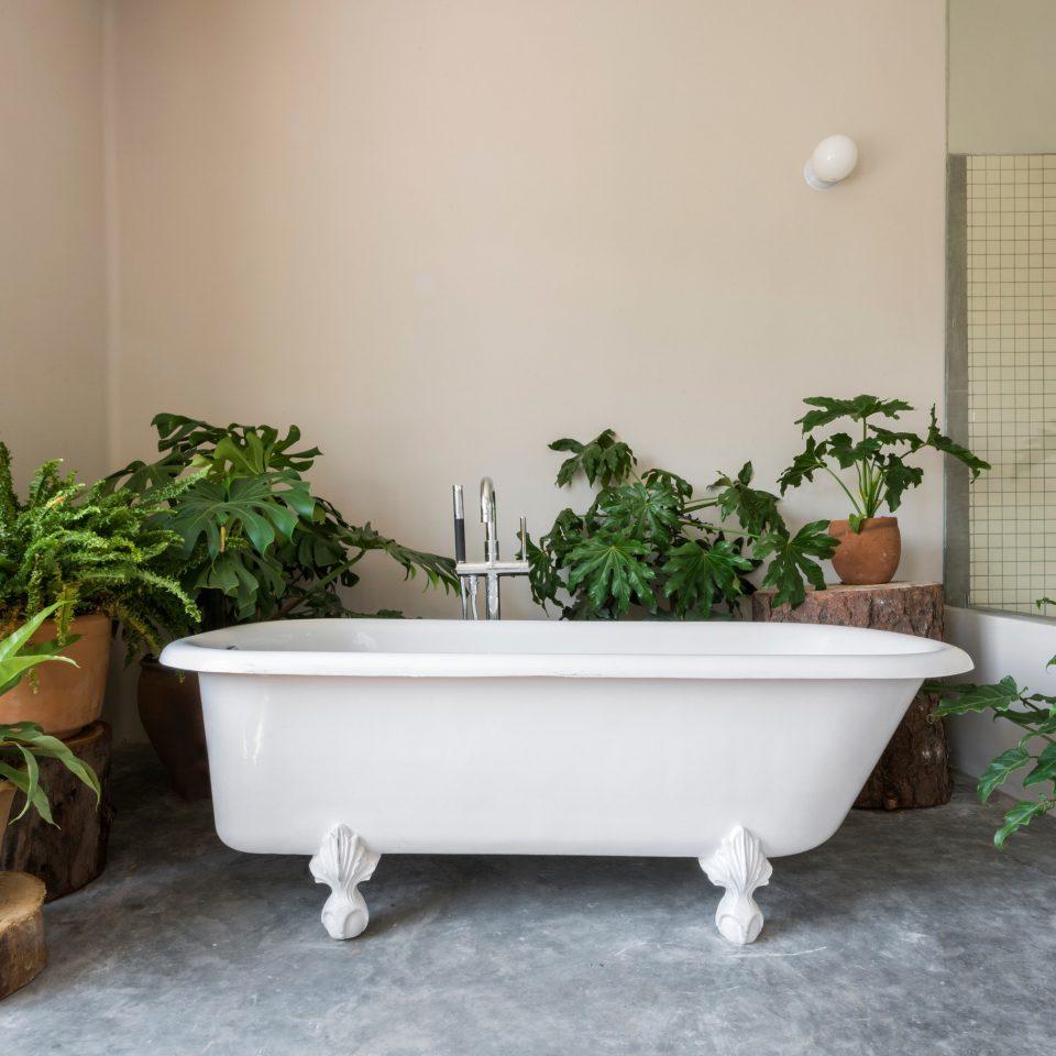 plant bathtub bathroom pot plumbing fixture flooring home bidet flowerpot