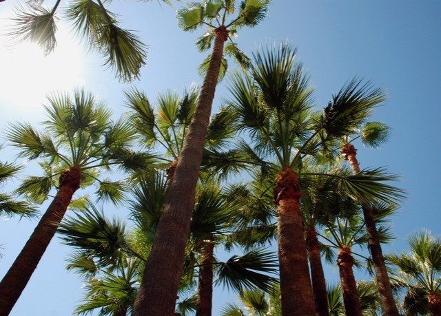 palm sky tree Beach palm family plant borassus flabellifer botany date palm land plant woody plant arecales tropics flowering plant branch flower food lined sandy