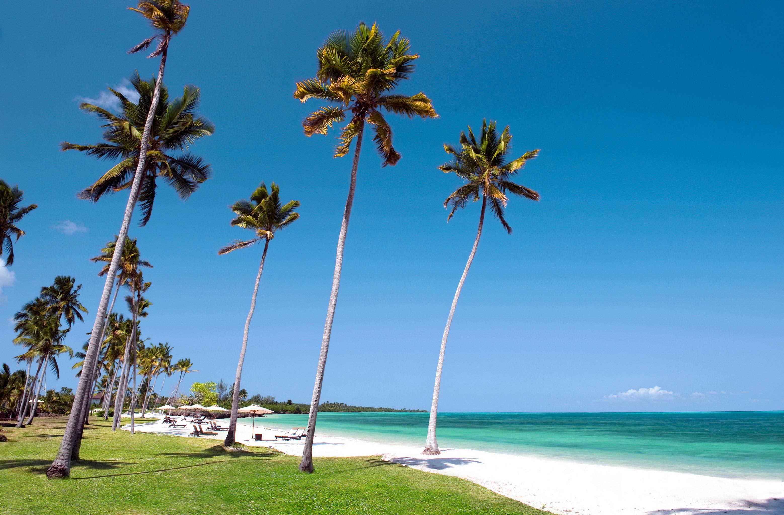 Beach Beachfront Family Luxury Nature Ocean Outdoors Resort Scenic views sky tree palm palm family plant Sea arecales woody plant caribbean tropics Coast flower wind Island shore sandy