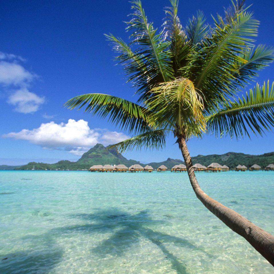 Beach Beachfront Family Island Luxury Scenic views water sky tree caribbean Sea Ocean palm palm family Nature tropics plant Coast arecales shore woody plant Lagoon islet atoll cape distance