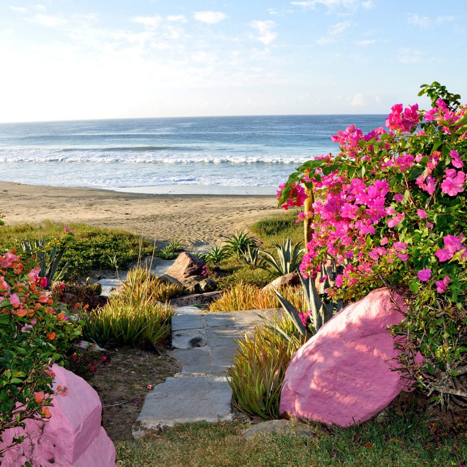 Beach Beachfront Grounds Scenic views sky flower grass flora shore Coast pink Sea plant Garden lawn colorful