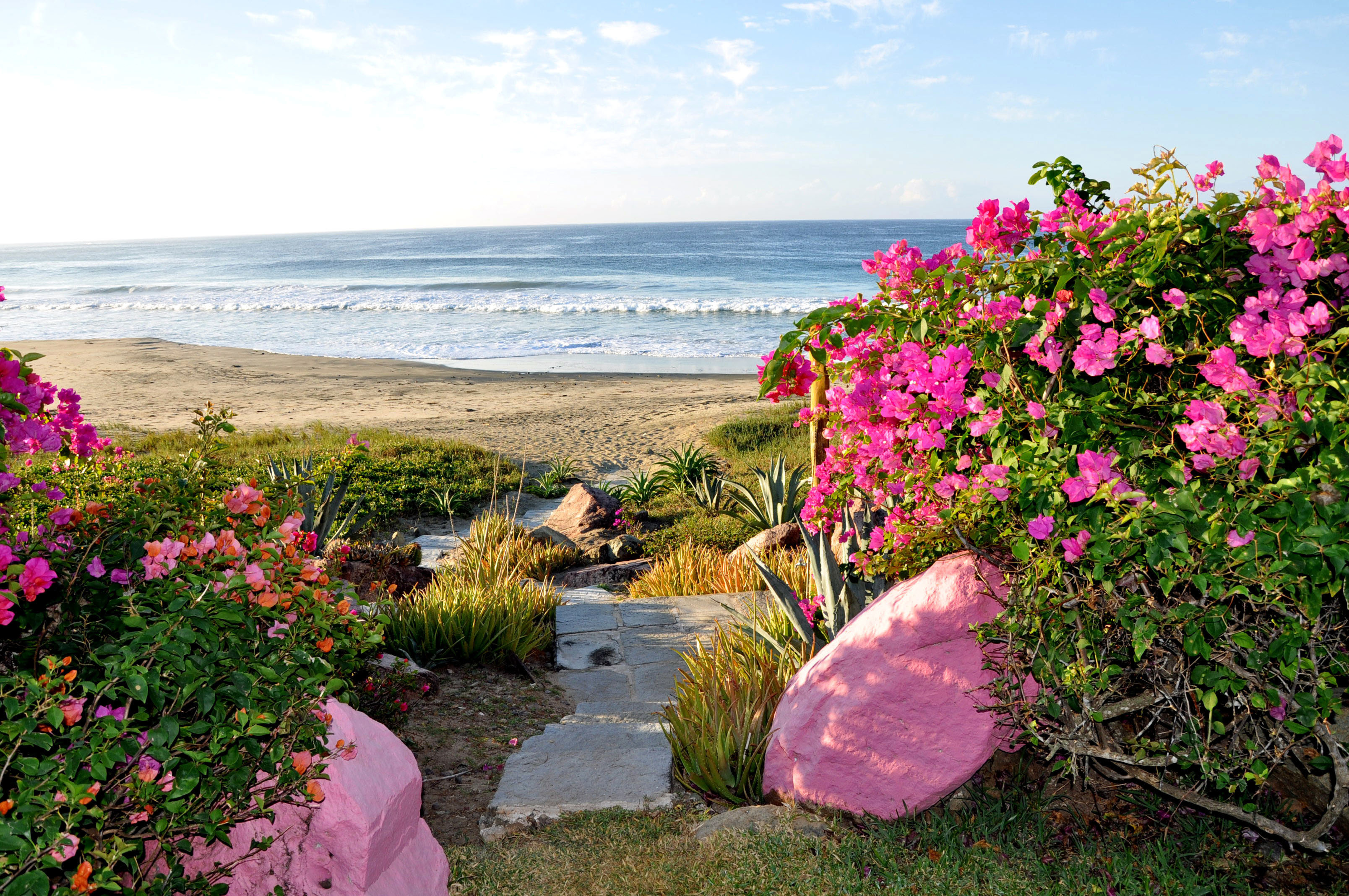 Beach Beachfront Grounds Scenic views sky flower grass flora shore Coast pink Sea plant Garden lawn colorful