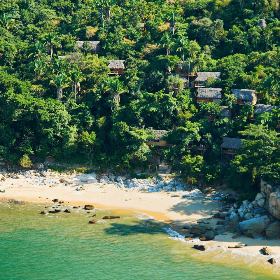 Beach Beachfront Grounds Waterfront tree habitat Nature River Coast shore Sea landscape Jungle tropics rainforest