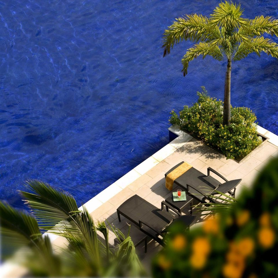 Beach Beachfront Hotels Island Romance Wellness tree grass woody plant arecales plant Coast flower Sea wind