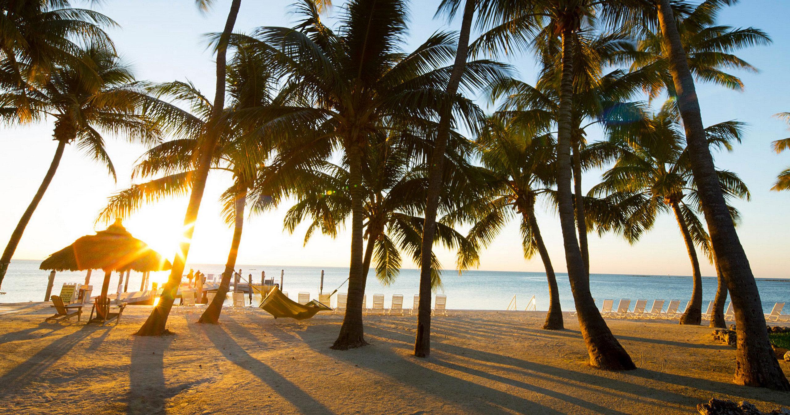 Beach Beachfront Hotels Resort Romance Scenic views water tree sky palm plant Ocean palm family Sea arecales morning sunlight woody plant Sunset Coast tropics sandy lined Lake shade shore
