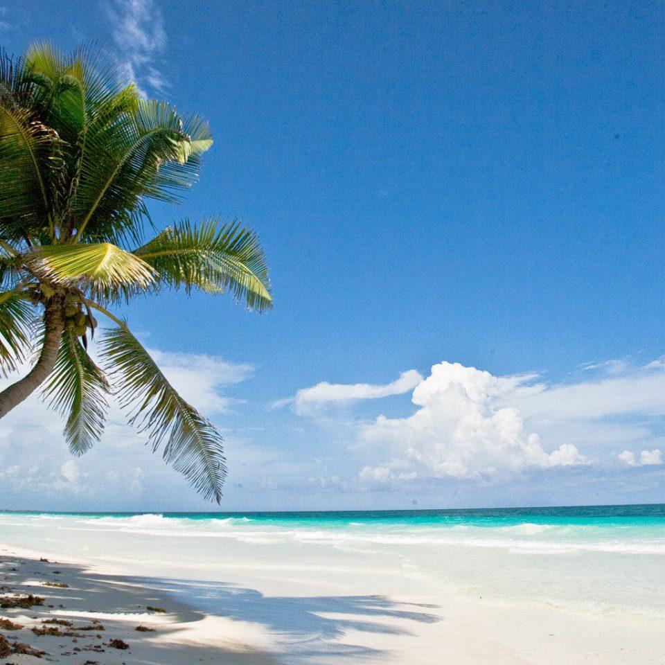 Beach Beachfront Island Waterfront water sky tree palm blue Ocean Sea caribbean shore Nature tropics horizon Coast plant arecales Lagoon cape islet sunlight palm family atoll sandy